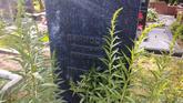 Захоронение ID 205159