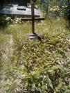 Захоронение ID 64717