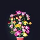 Виртуальный цветок